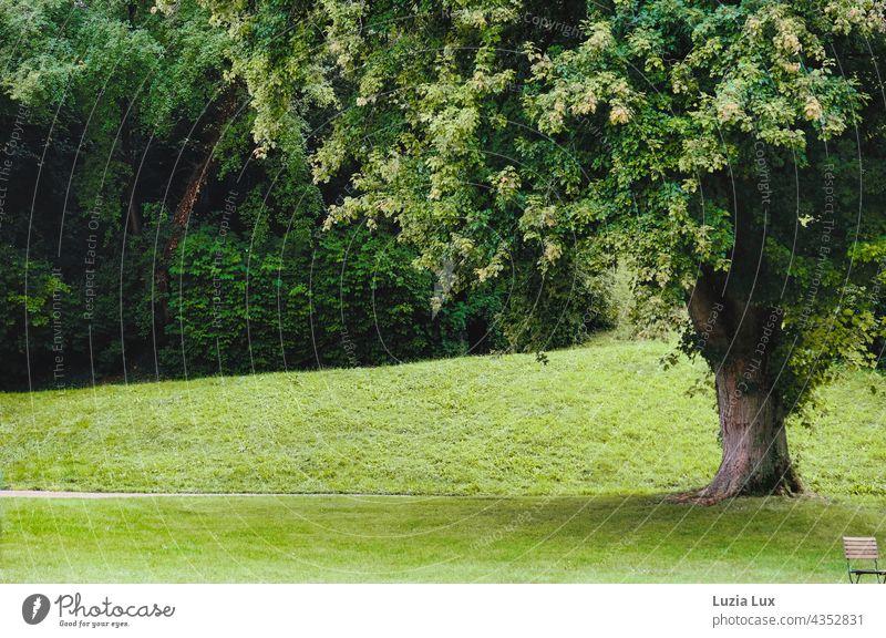 Platz nehmen, im Park - ein mächtiger alter Baum, viel Grün und ein Stuhl, der auf Gäste wartet grün groß Laub Sommer Sonnenschein sonnig menschenleer einladend