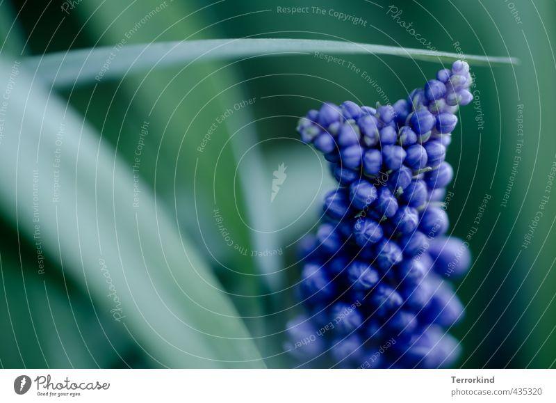 punktpunkt Natur blau Pflanze Blume Gras Blüte klein Wachstum Blühend Kugel sanft sensibel gedeihen Photosynthese