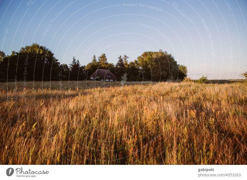 Sommerliche Landschaft mit verstecktem Haus im Hintergrund Feld Himmel Außenaufnahme Fachwerkhaus Natur Schönes Wetter Menschenleer Urlaub