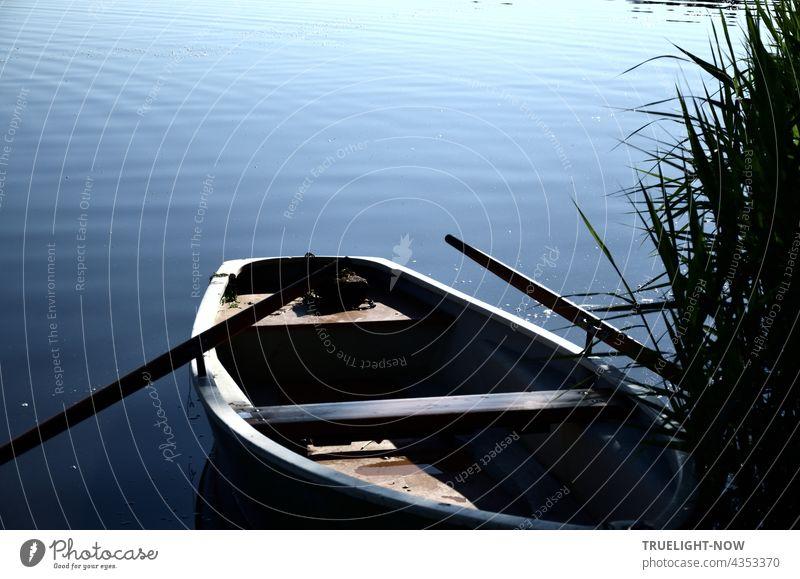 Traditionelles Sommer Flirt Medium - auch gern zum Angeln eingesetzt. Ein altes Ruderboot aus Holz mit eingelegten Rudern liegt einsatzbereit am mit Schilf bewachsenen See Ufer in der Morgensonne