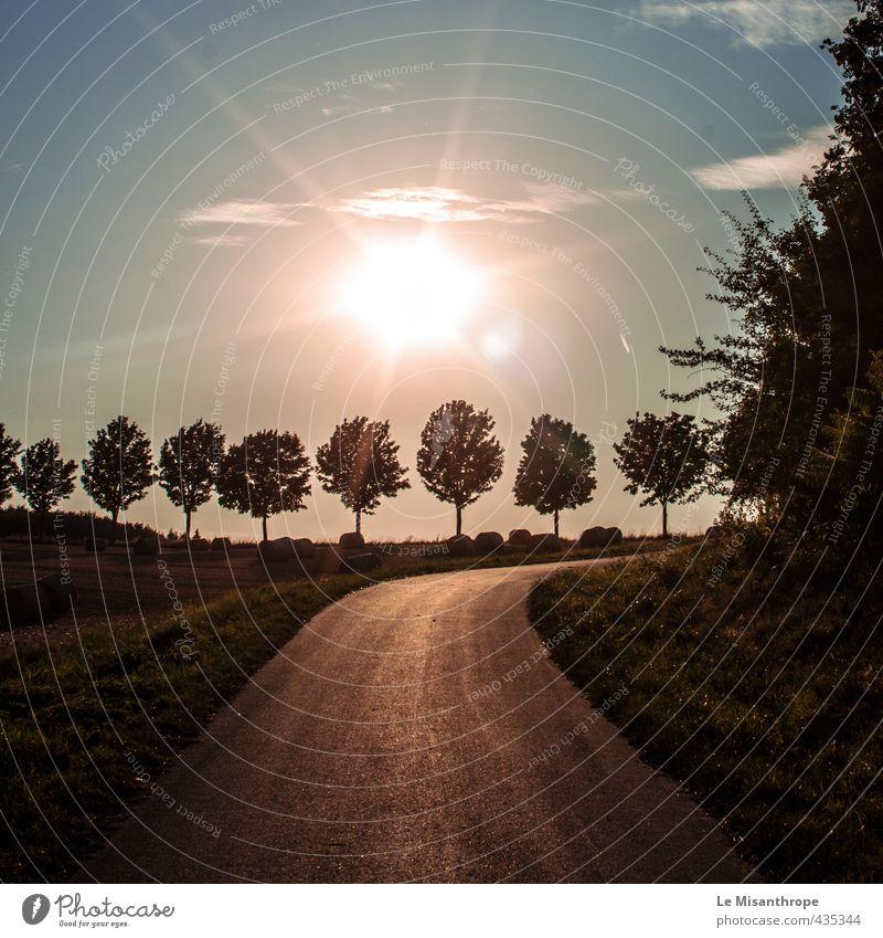 Gebundene Bäume Natur blau grün Sommer Sonne Baum Landschaft ruhig Gras Freiheit Glück Stimmung braun Feld Idylle Erde