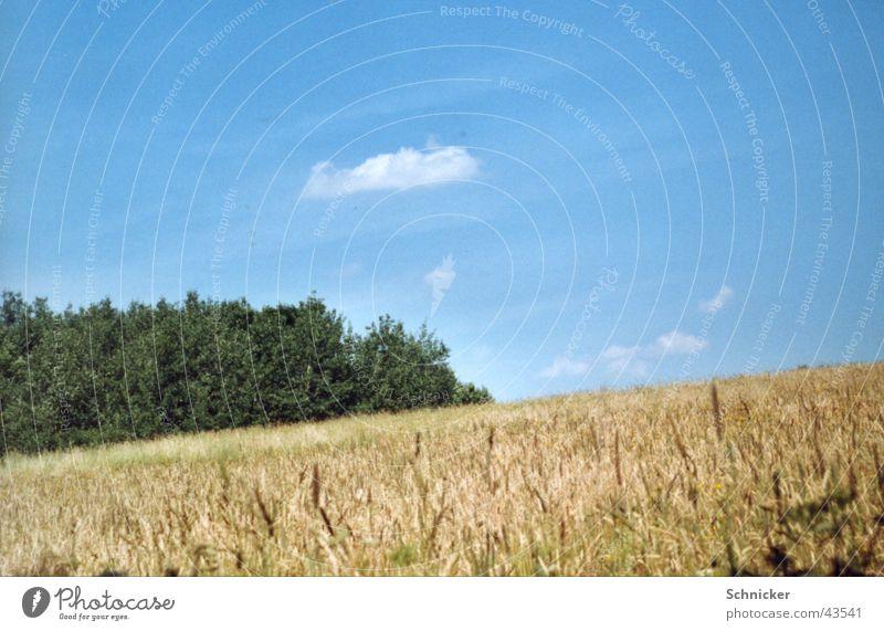 Wiesen Idylle Himmel grün blau Gras Landschaft Weizen Thüringen Ilmenau