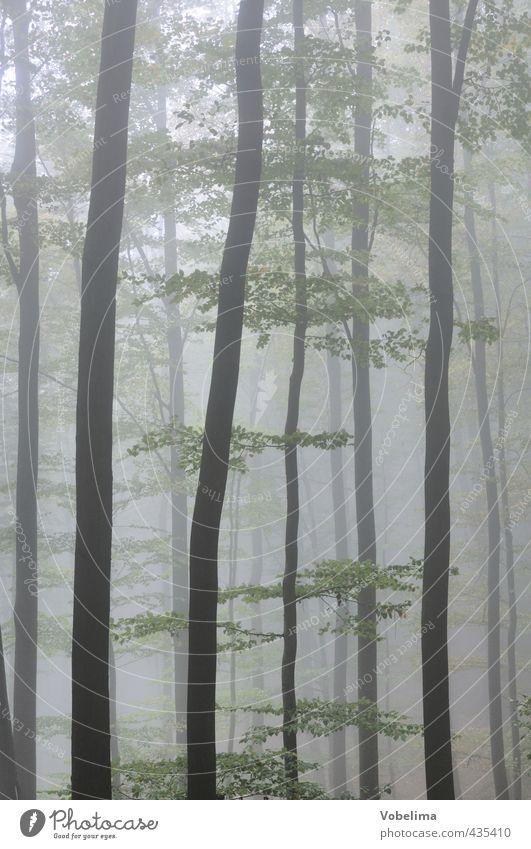 Nebel im Wald Natur Herbst Wetter Baum kalt grau grün Stimmung Traurigkeit Trauer Einsamkeit unheimlich mystisch Baumstamm Farbfoto Gedeckte Farben