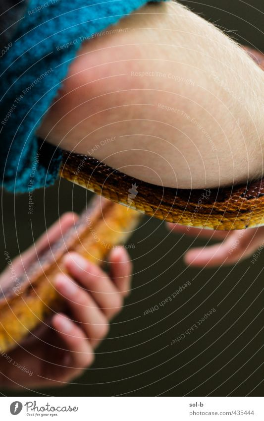 Schlangenbeschwörer Mensch maskulin Junger Mann Jugendliche Arme 1 18-30 Jahre Erwachsene Tier Haustier Kornnatter exotisch nah natürlich orange Tierliebe