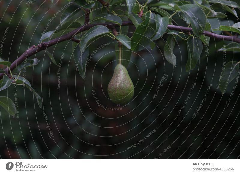 Neue Ernte birne birnenbaum obst ast zweig eine Birne garten birnenzweig gesund vegan
