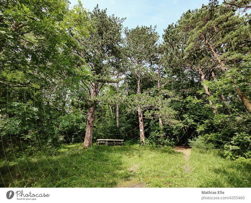 Guter Platz für eine Wanderpause Pause Wanderung Wandern Wald Bäume Bank Gras Grün Waldboden Pause machen Pausenplatz pausenbeschäftigung pausenzeit pausensnack