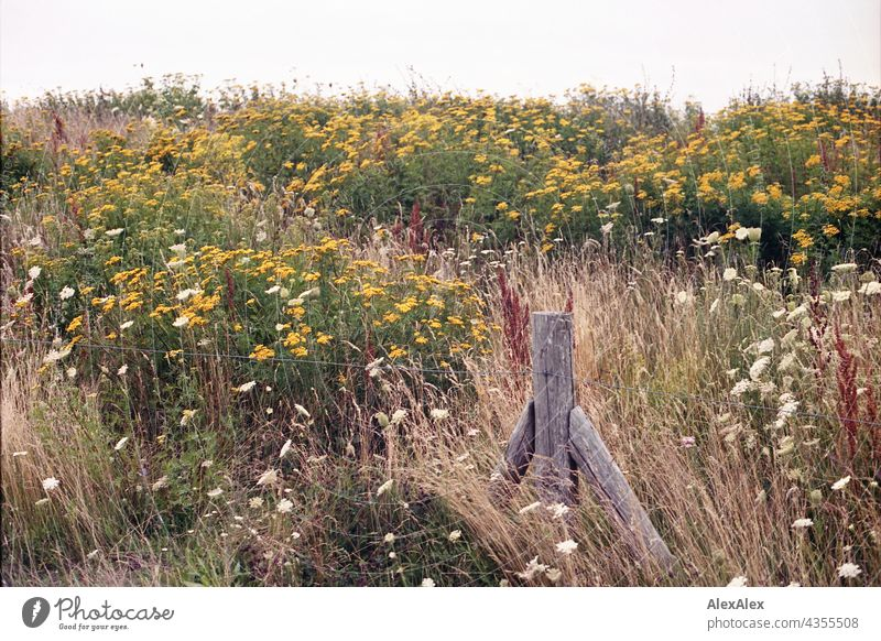 Ostsee- Deich voller Blumen - Blumenwiese mit Zaunpfahl und Drahtzaun Hügel Wiese Natur Pflanzen rot gelb grün Sommer schönes Wetter Wind Gras Sonnenlicht warm