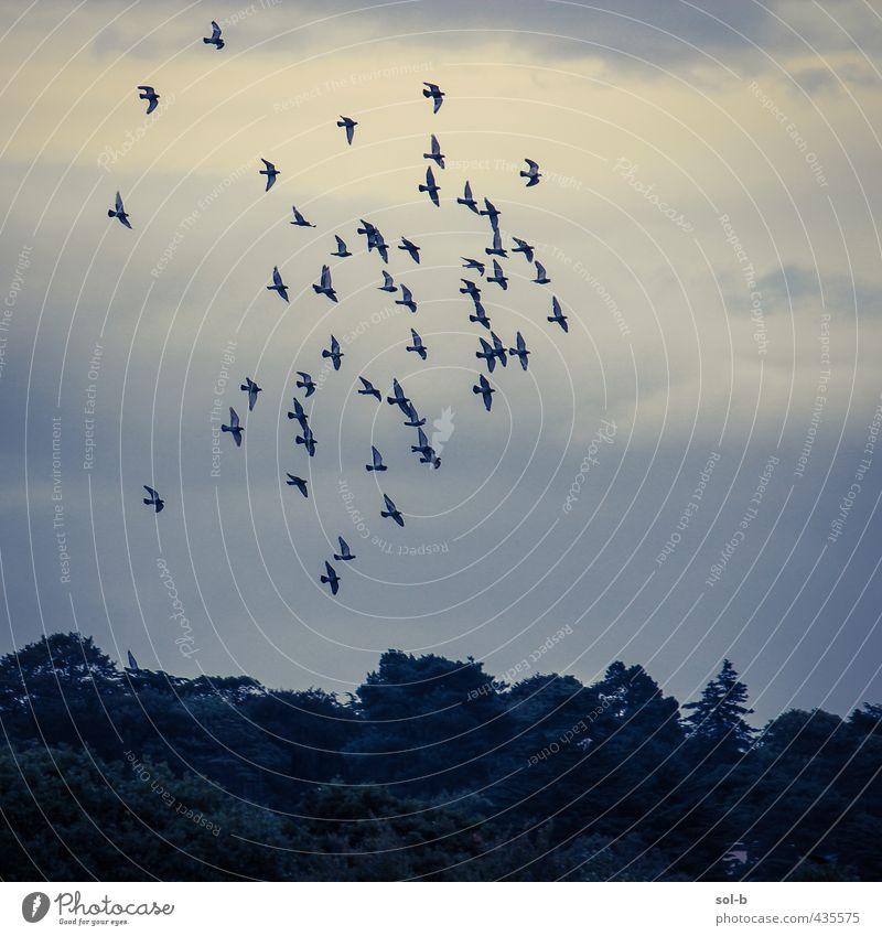 Kilbogget Natur Luft Himmel Wolken Baum Park Vogel Schwarm dunkel natürlich Baumkrone Traurigkeit fliegen Vogelflug Farbfoto Außenaufnahme Menschenleer Tag