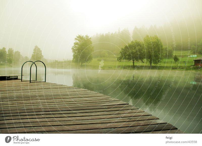 lakewood Wasser Baum Holz See Nebel Badesee