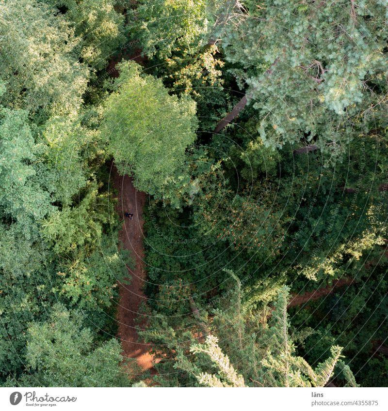 Drohne fliegt Waldweg an Weg Bäume Umwelt Natur Außenaufnahme Drohnenansicht Vogelperspektive Baum Farbfoto Wege & Pfade Landeplatz Landeanflug Mischwald