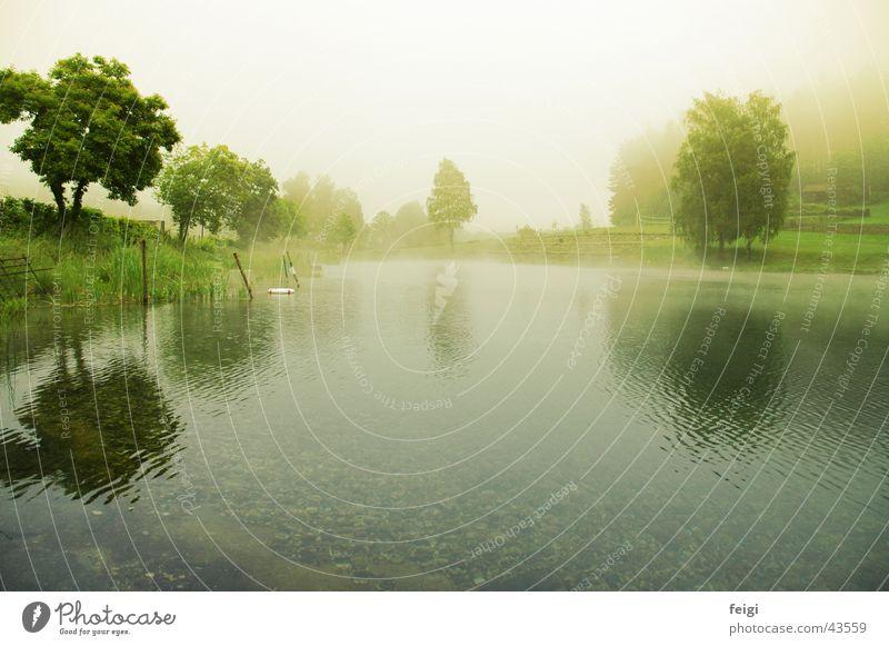 lakemorning Nebel See Baum Kieselsteine Wasser tief