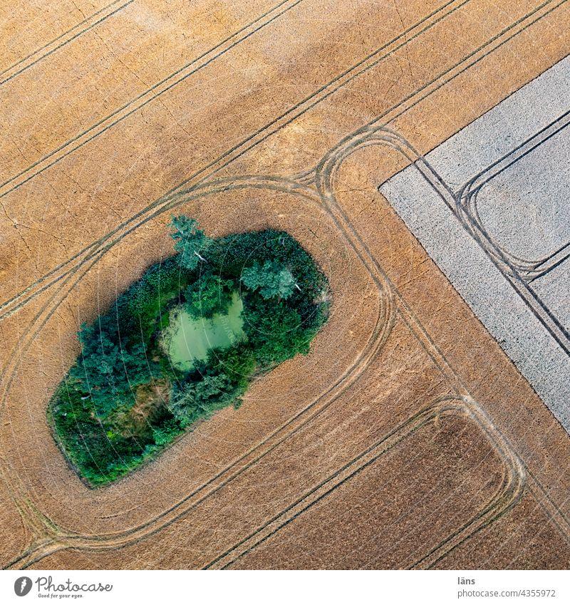 Weiher im Ackerland Ackerbau Teich Getreide Landwirtschaft Natur Feld Sommer Getreidefeld Menschenleer Wachstum Kornfeld Nutzpflanze Vogelperspektive