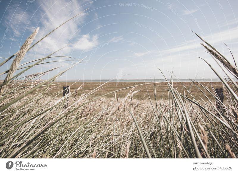 point of view Natur Landschaft Himmel Wolken Horizont Sommer Schönes Wetter Wärme Gras Sträucher Farn Wiese Idylle Zaunpfahl Meer Dürre Farbfoto Gedeckte Farben