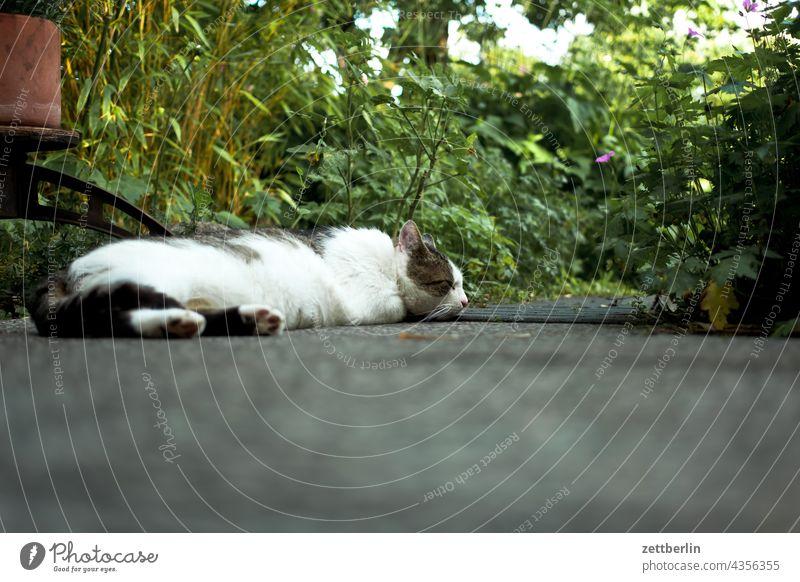 Katze zu Besuch dämmerung erholung erwachen ferien garten himmel kleingarten kleingartenkolonie menschenleer natur pflanze ruhe saison schrebergarten strauch