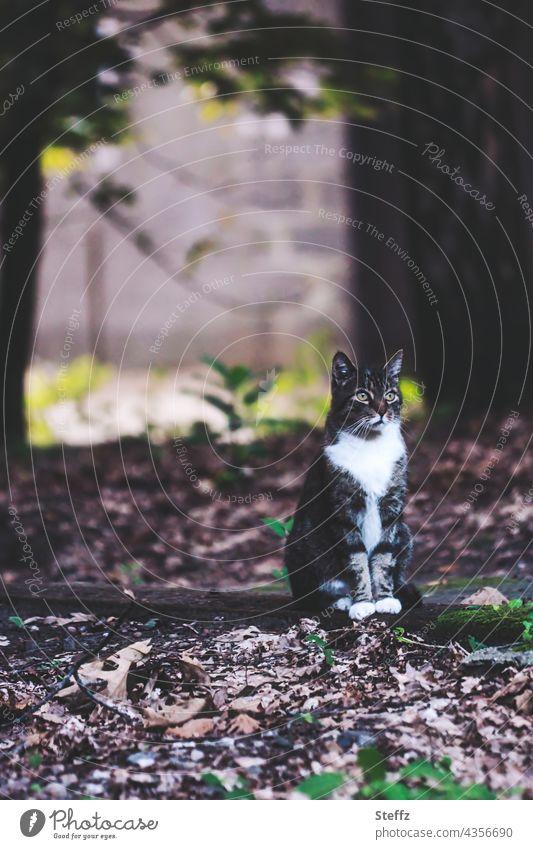 Saisonende. Blätterteppich im Angebot. Herbstkatze schaut. Katze Haiku schauen herbstlich Katzenbild poetisch Herbstlaub Hauskatze Mieze Miezekatze