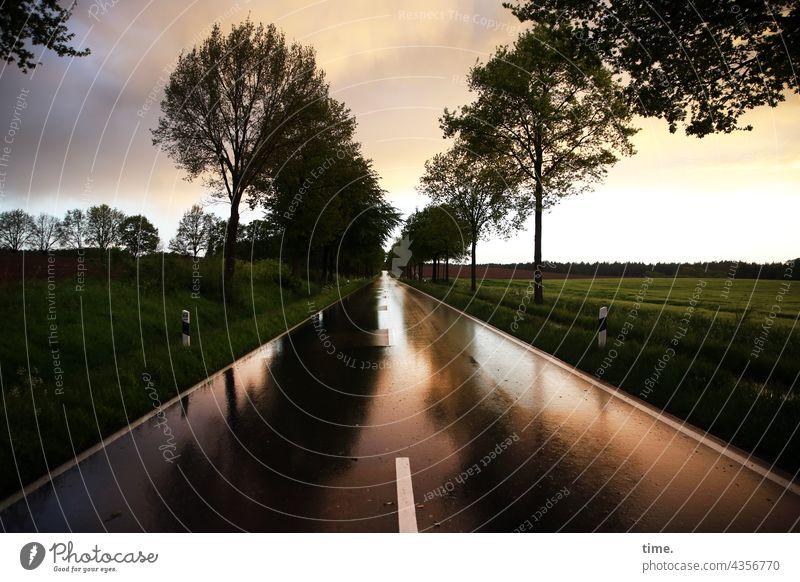 Regen über Land regenwolken ferne straßenverlauf gerade allee asphalt mittelstreifen bäume baum abendlicht himmel horizont spiegelung reflexion spiegeln