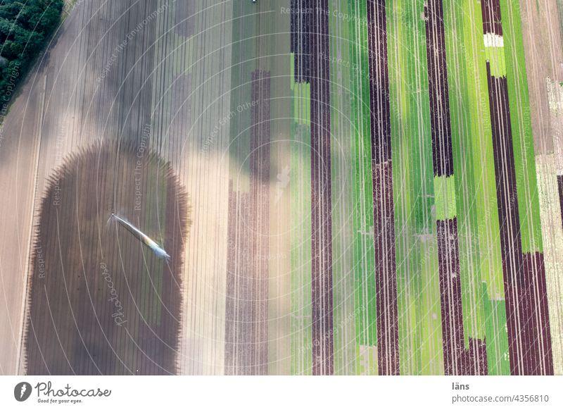 Bewässerung beim Salatanbau Landwirtschaft Außenaufnahme Ackerbau Feld Wachstum Menschenleer Nutzpflanze Ernährung Vogelperspektive Drohnenansicht gestreift