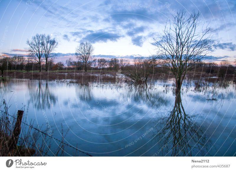 Tristesse Umwelt Natur Landschaft Luft Wasser Winter Wetter Baum Wiese Feld ästhetisch bedrohlich dunkel fantastisch gruselig kalt nass trist blau Stimmung