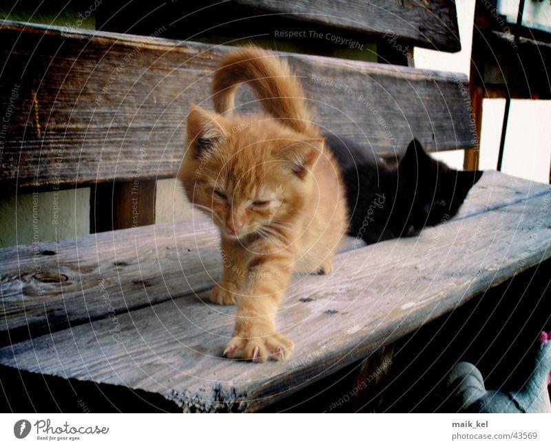 die Waffen einer Katze rot Krallen Pfote Haustier Tier Hauskatze Natur