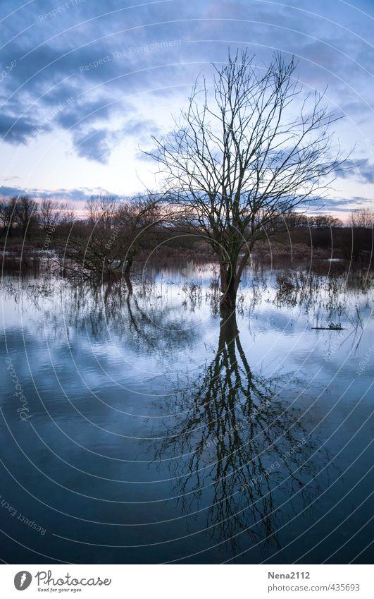 I'm a poor lonesome tree... Natur blau Wasser Baum Landschaft Wolken Winter Wald kalt Umwelt Wiese Traurigkeit Tod Luft Feld nass