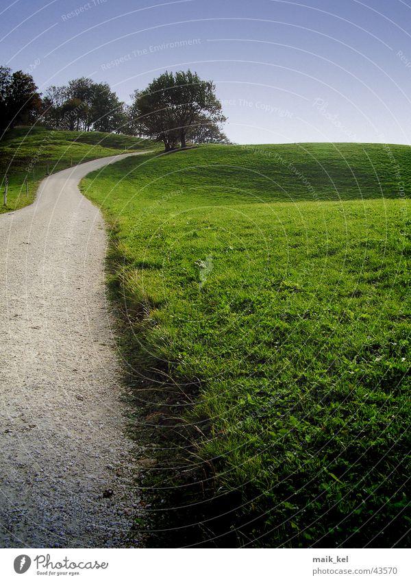 Feldweg Gras grün Fußweg Amerika Landstresse Wege & Pfade Weide Natur