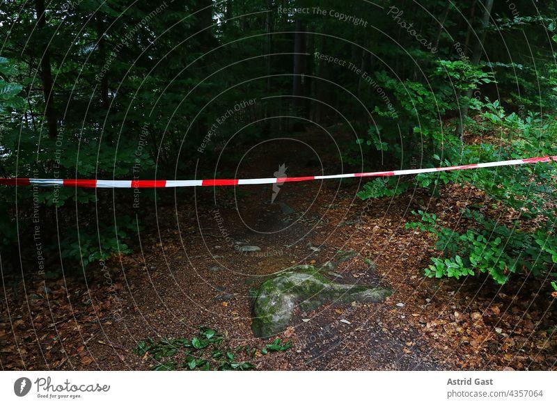 Ein Waldweg ist mit einem rot-weißen Absperrband gesperrt wald absperrband tatort sperrung gefahr gefährlich sperren waldweg verboten durchgang verboten