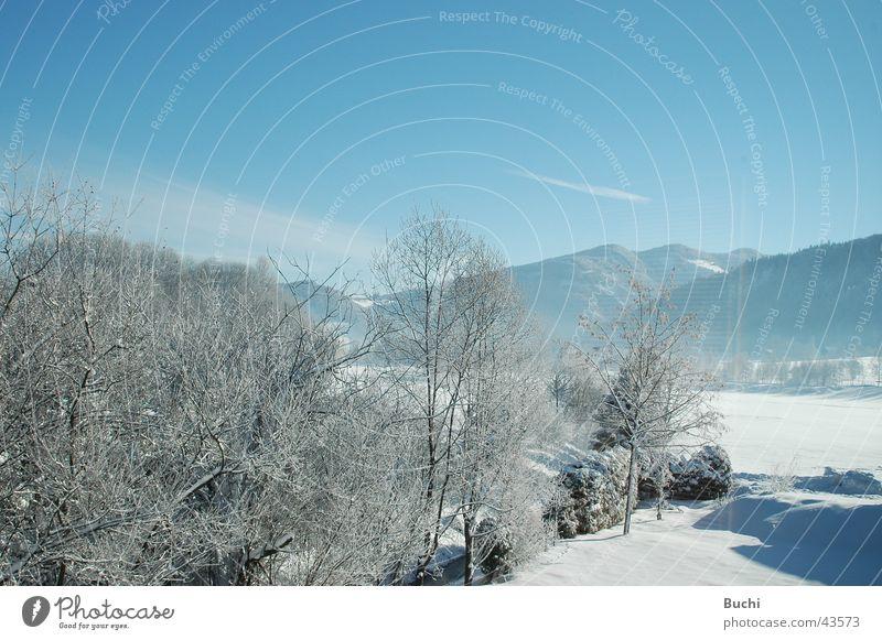 Winter kalt weiß Baum Schnee Frost blau