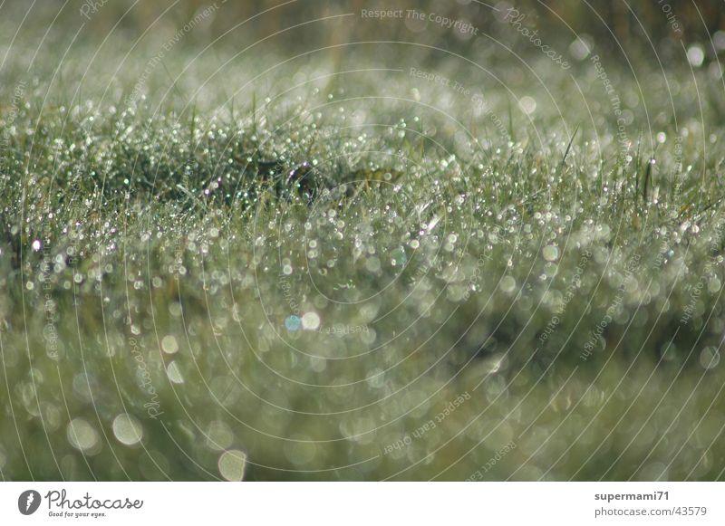 Morgentau Sonne Gras Wassertropfen Seil frisch