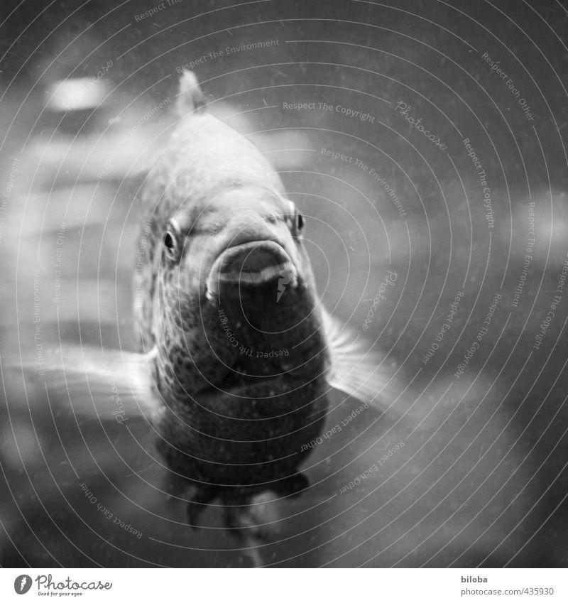 Hallo erstmal Wasser Tier Auge Schwimmen & Baden Mund Fisch Aquarium Flosse