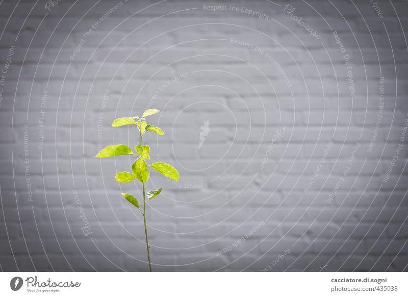 Wenn ich mal gross bin Pflanze grün Sommer Baum Einsamkeit Umwelt Wand Mauer klein grau Garten Fassade frei Erfolg Beginn Zukunft