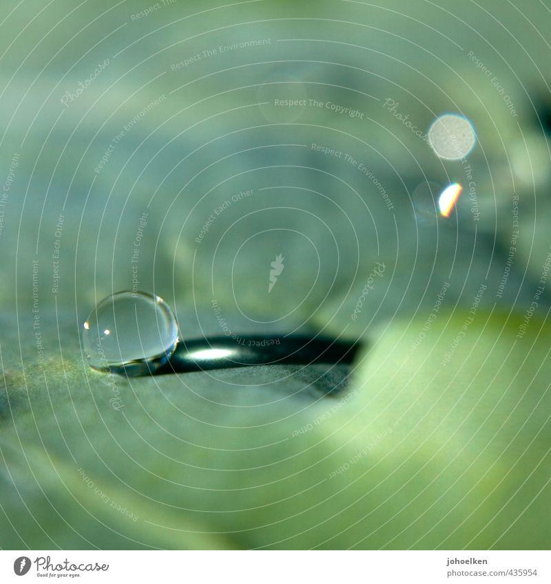 Das Runde muss ins Eckige Wassertropfen Sonnenlicht Pflanze Blatt Glas Kugel Tropfen glänzend leuchten liegen ästhetisch Flüssigkeit grau grün Kraft Stress