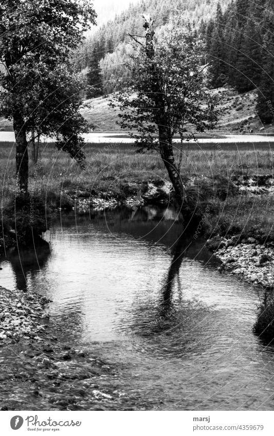 Die Spiegelung im Bach verwischt die kaputte Krone des Bäumchens. Spiegelung im Wasser Fließgewässer Baum düster Reflexion & Spiegelung Natur