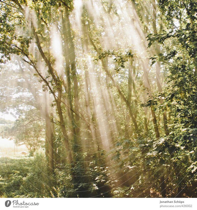 licht bricht schlicht durchs dickicht Natur schön grün Pflanze Baum Landschaft Wald Umwelt Reisefotografie Idylle ästhetisch Hoffnung Gleise Rügen brechen
