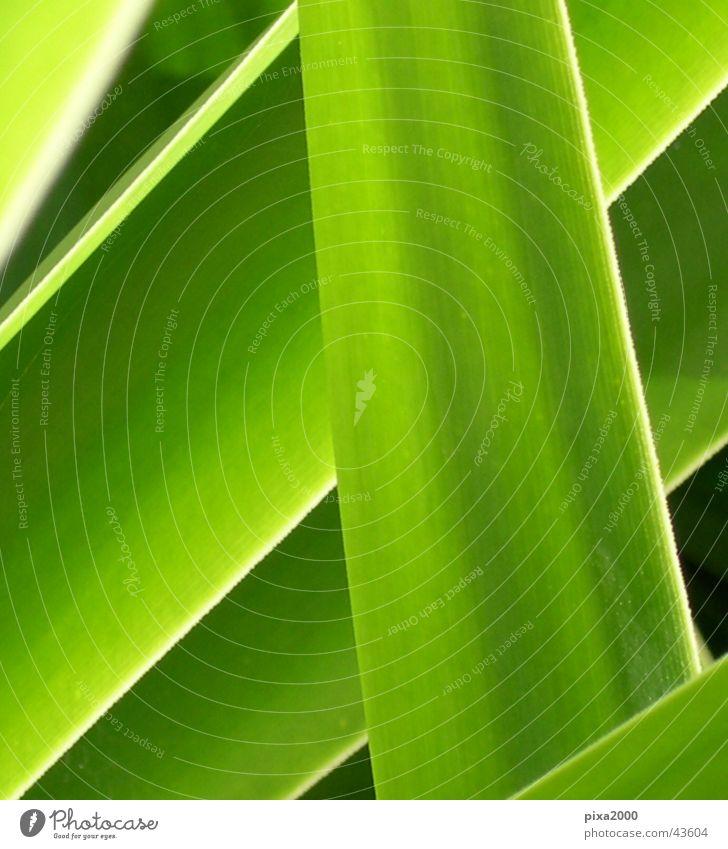 neulich im dschungel... grün Pflanze Stil Hintergrundbild nah