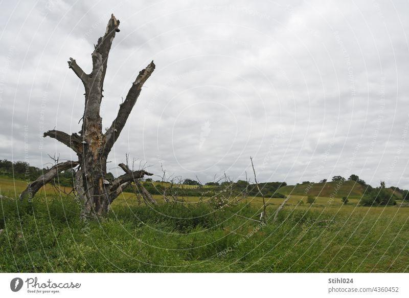 Baum-Torso in Wiesenlandschaft BAum abgestorben torso Ruine tot Landschaft Auenlandschaft grün abgebrochen Bruchstück Umwelt Menschenleer Gras Himmel Natur