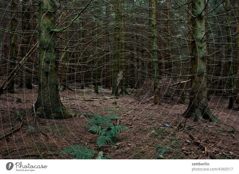 Irgendwo im Nadelwald deutschland dorf ferien hessen idyll kleinstadt landschaft landwirtschaft nordhessen sommer sommerfrische urlaub wiese nadelwald nadelbaum