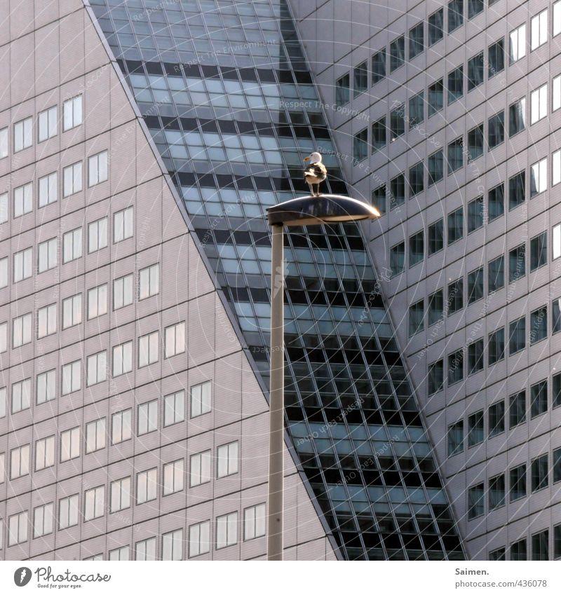 großstadtmöwe Haus Hochhaus Gebäude Architektur Mauer Wand Fassade Fenster Tier Vogel Möwe Möwenvögel 1 Blick sitzen Straßenbeleuchtung Farbfoto Außenaufnahme