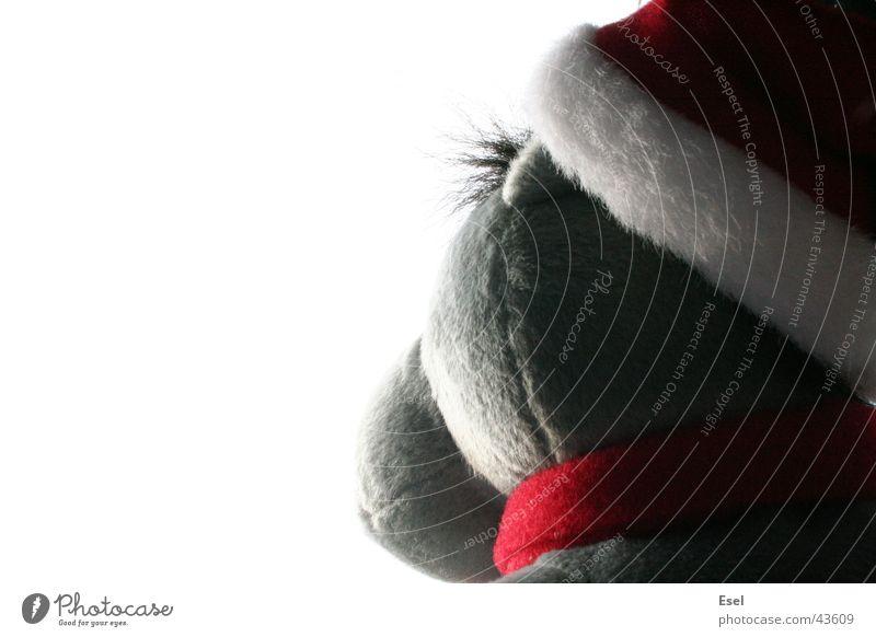 Donkey Skywatch Weihnachten & Advent Himmel Perspektive Freizeit & Hobby Esel Stofftiere