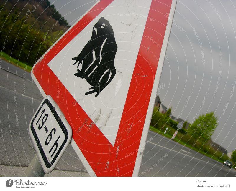 FRöSCHE Straße PKW Schilder & Markierungen Verkehr Frosch Symbole & Metaphern Fototechnik rot-weiß
