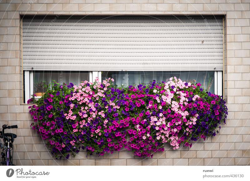 Das Beste draus machen (wollen) Stadt Pflanze Sommer Blume Blatt Haus Fenster Wand Frühling Mauer Architektur Gebäude Blüte Garten Freizeit & Hobby Wohnung
