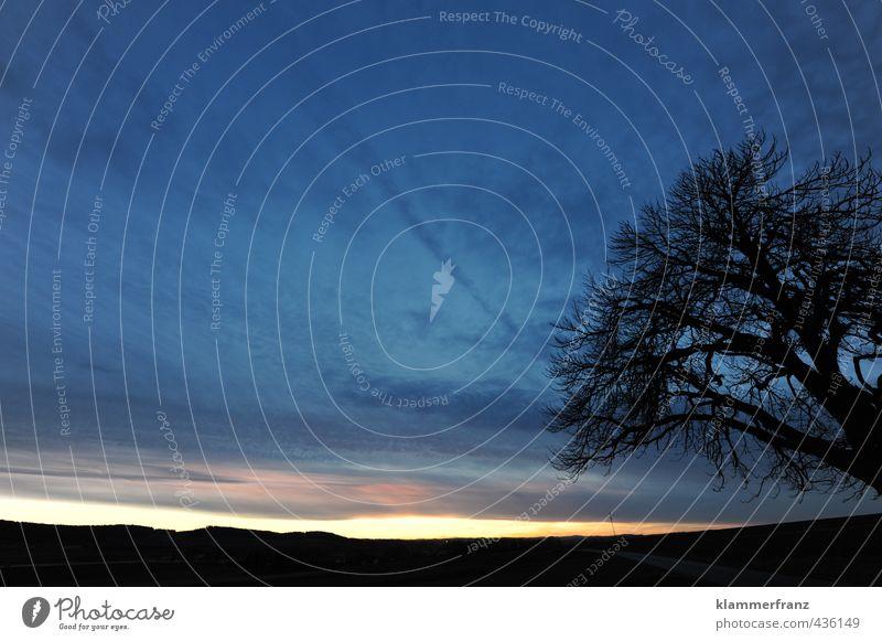 Baum von rechts Himmel Natur Ferien & Urlaub & Reisen blau schön Sommer Erholung Einsamkeit Landschaft ruhig Wolken dunkel schwarz Straße orange