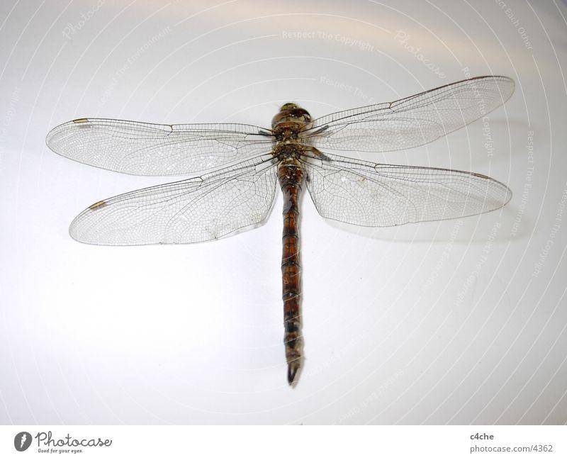 Libelle #2 Natur Tier Insekt