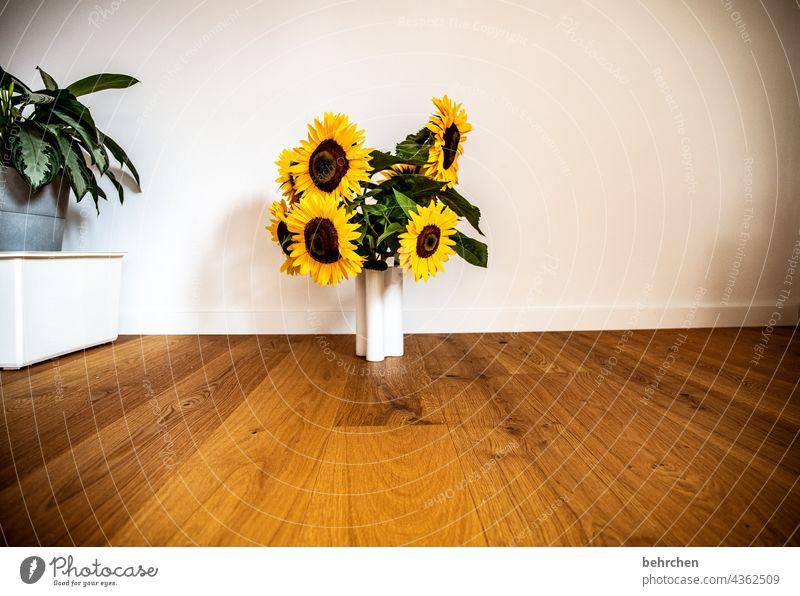 ein strauß voll sonne Blühend gelb Kontrast Farbfoto Pflanze Sommer Duft duftend Frühling wunderschön blühen Blüte Blume leuchtend Blütenblatt Umwelt Wärme