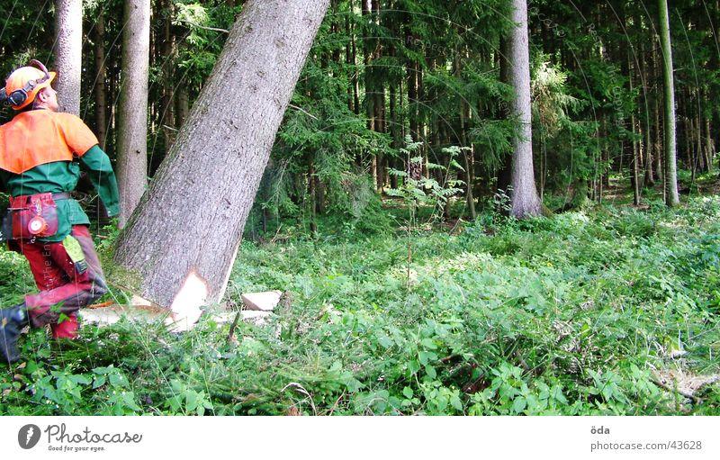 Baum fällt #2 Mann grün Pflanze Wald Ast Arbeiter Säge Forstwirtschaft Abholzung fällen Schutzbekleidung Motorsäge Kettensäge