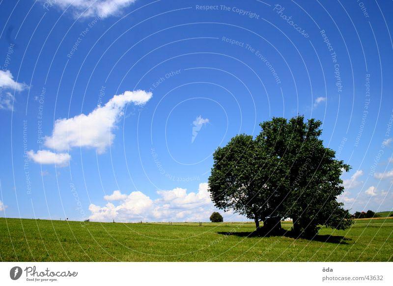 baum auf blaugrün Himmel Baum grün blau Wolken Einsamkeit Wiese Gras Landschaft Aussicht