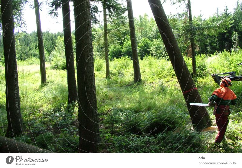 Baum fällt #1 Mann grün Pflanze Wald Ast Säge Forstwirtschaft Werkzeug Abholzung fällen Schutzbekleidung Motorsäge Kettensäge