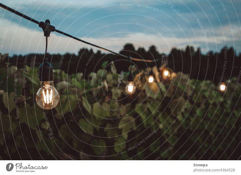 Lichterketten im Freien hängen abends in einem Weinberg. Romantische Sommernacht Konzept. Edison-Lichter. Hintergrund Hinterhof Barbecue grillen schön Brunch