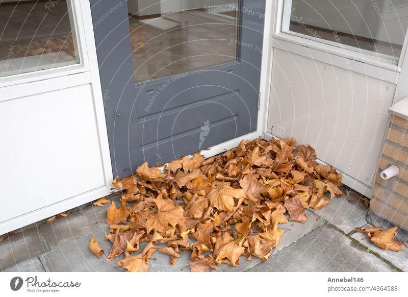 gelbes Ahorn-Herbstblatt liegt bedeckt auf dem Balkon der Wohnung, Haufen von Herbstlaub muss aufgeräumt werden Baum Spaziergang Blätter Garten hölzern reisen