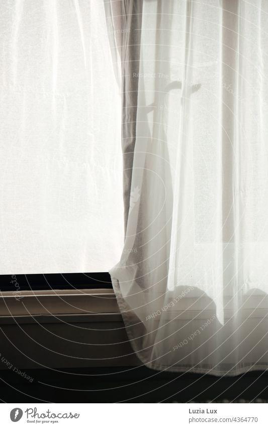 Am Fenster... Vorhänge im Wind, Schattenspiel am Fenster Vorhang licht Licht Gardine Stoff Häusliches Leben Wohnung weiß hell Gedeckte Farben Detailaufnahme