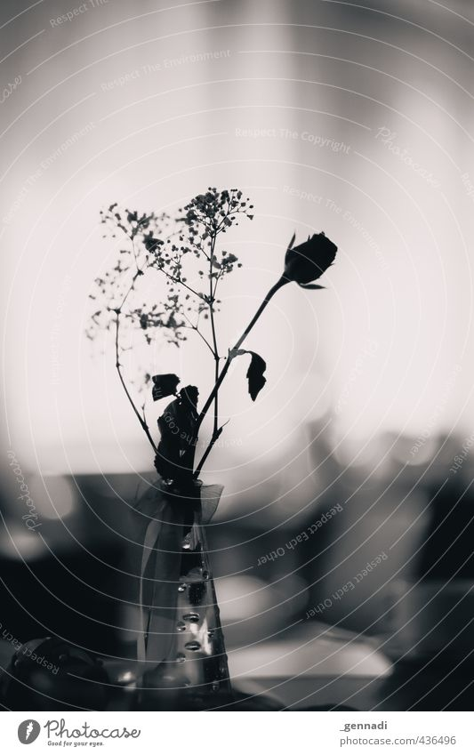 Rosen sind schwarz-weiß - ein lizenzfreies Stock Foto von Photocase